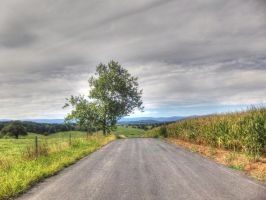 Tree On A Country Road by jim88bro