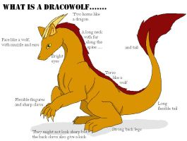 what is a dracowolf...... by DracoWolf0-0