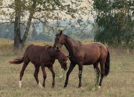Horses game V by Lilia73