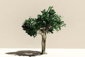 Crepe Myrtle Test 2 by 2753Productions