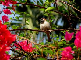Sparrow by ppdebnath2112