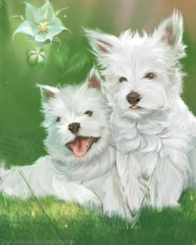 DAILY PAINT : Twins White Terrier  #76 by Dan-zodiac