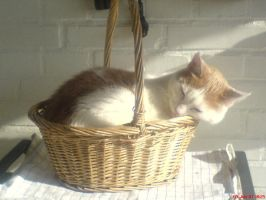 Cat in a basket 2 by Hoshi-Hana