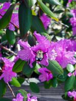 Bumble Bee by Ranora