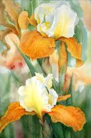 Orange Iris by louise-art