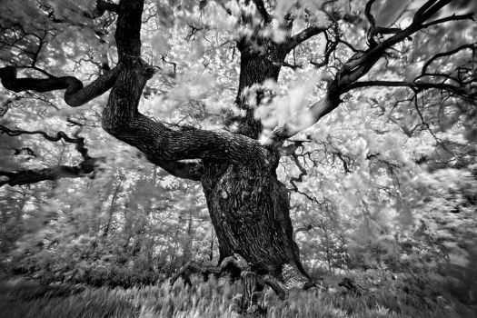 Portrait of tree. . . . by xMEGALOPOLISx