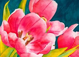Pink Tulips by MyeHaine