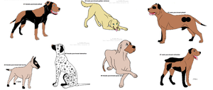 adoptable pure breed dogs SOLD by PrincessaDramaQueen