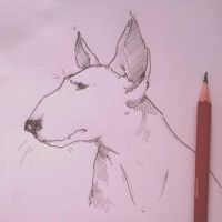 Bull Terrier by icantreid
