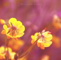 joyfulness by Aimelle