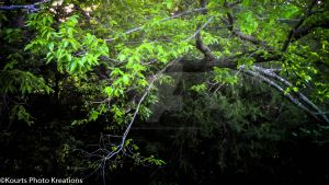 Thicket by KourtsPhotoKreations