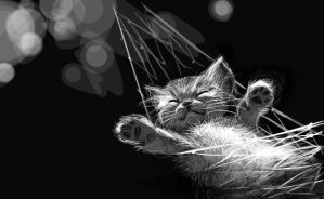 cat by INSANATY-2012