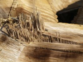 Wood texture2 by Irie-Stock