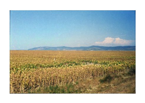 mountains and field by junkyshtan