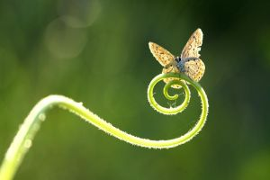 spiral by lisans