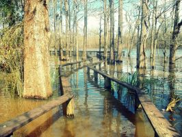 Escambia River by MossBerg850
