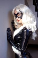 black cat 6 by AlisaKiss