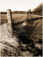 Down at the fields by Lexana