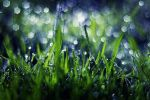 Grass Bokeh by Justine1985