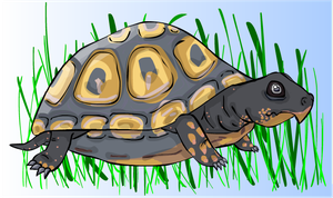 Turtle by PsyKoViggy