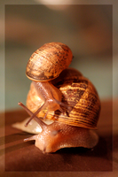 Snail-Back Ride by YellowEleven