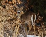 River bank Doe by natureguy