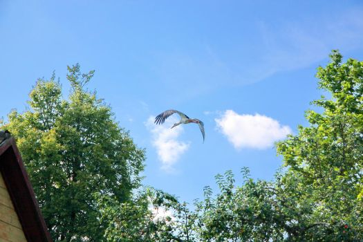 Flying by viesuliux