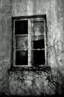 window by iwetka