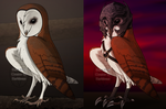 Barn Owl Creator-Lt Cdr Eve by airbender01