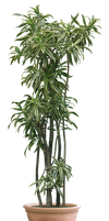 plant png 10 by DIGITALWIDERESOURCE