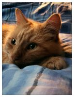 Tiggy sleeping on my bed by juven
