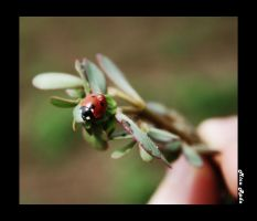 Lady Bird And A Drop Of Water by Zamolxes
