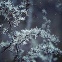 frozen breath V by JoannaRzeznikowska