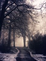 Fog Day by Peterix