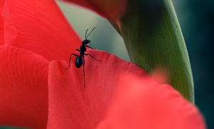 Ant. by 48photography