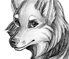 .: Realistic Wolf : Sketch :. by stolenimages