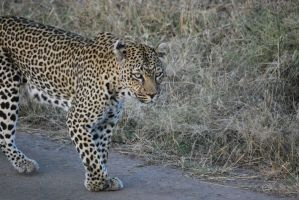 africa pic2 by davidsdoodles