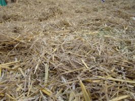 Straw and Hay II by LuDa-Stock