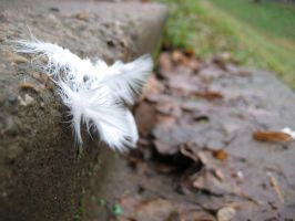 the feather of a dove by Tassola