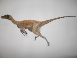 Dromaeosaurus albertensis (with short feathers) by Oddity-1991
