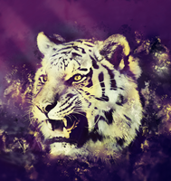 tiger lp by duelord