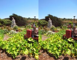 Stereograph - Tractor by alanbecker