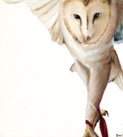 Barn Owl by whitewolf61084