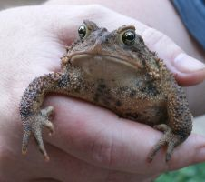A Toad in the Hand by SacredJourneyDesigns