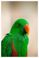 a green parrot by aquaking