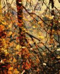 leaves of autumn in spring by stijn
