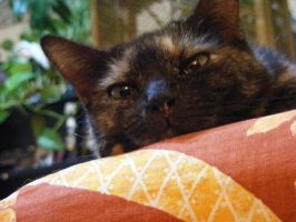 Nosey cat-cat by grlgeorge