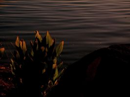Calm Red Waters by Lunar-Ray