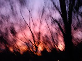 out of focus by calicojack78