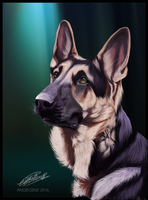 Kona the GSD by Angiegsnz